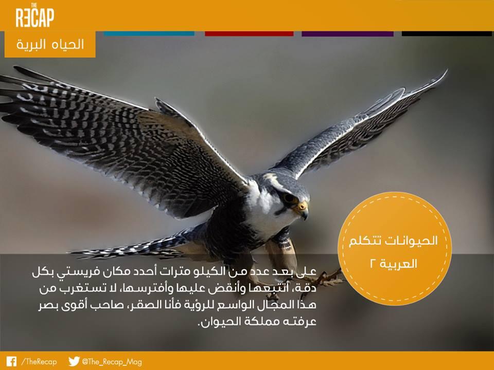 الحيوانات تتكلم العربية