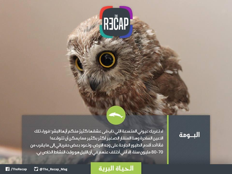 الحيوانات تتكلم العربية - البــــــومة
