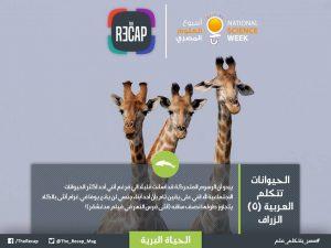 الحيوانات تتكلم العربية - الزراف