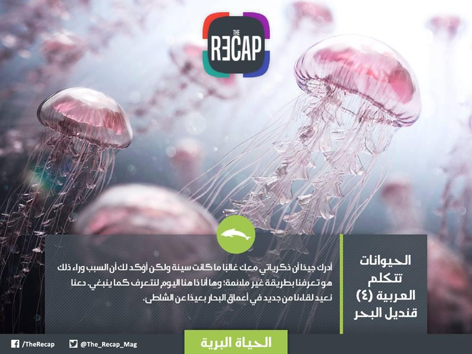 الحيوانات تتكلم العربية - قنديل البحر