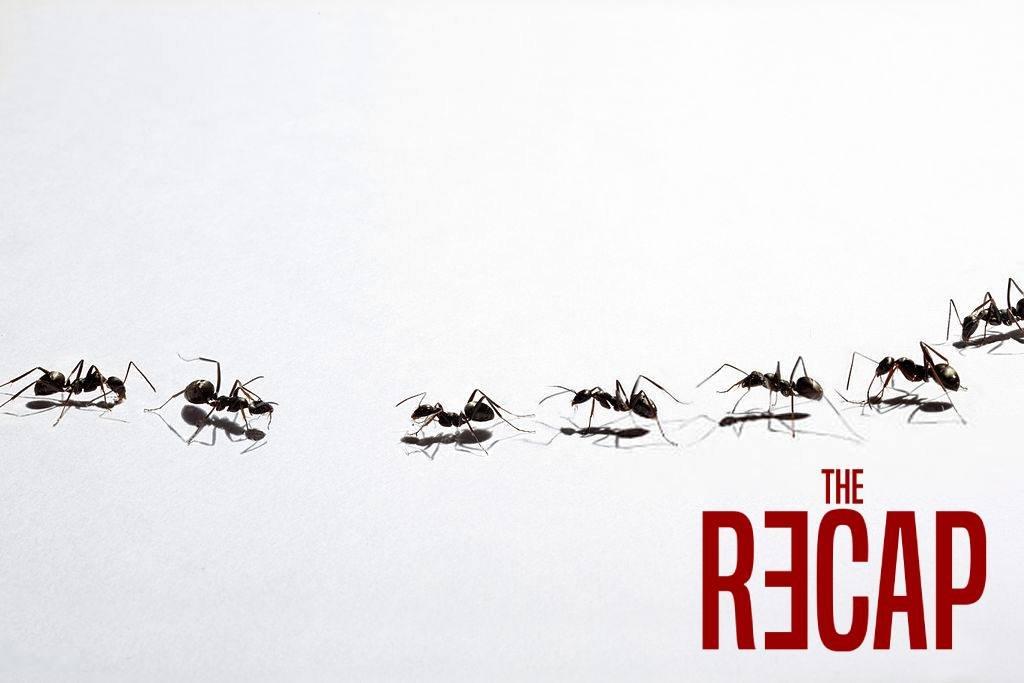 لماذا يسير النمل في صفوف مستقيمة؟